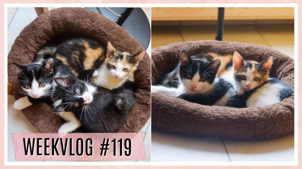 E-book lancering, vaccinatie, pakketjes & de kittens zijn er // WEEKVLOG #119