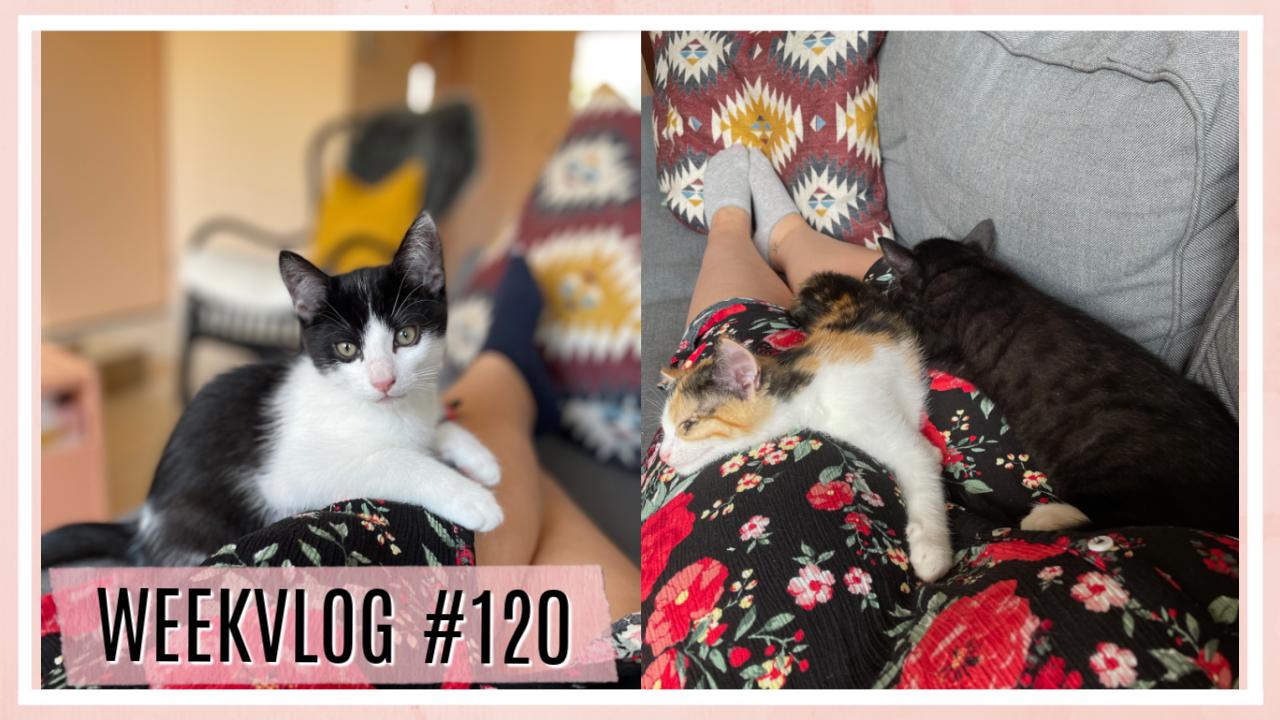 Eerste week met onze kittens (+ nieuwe items) // WEEKVLOG #120
